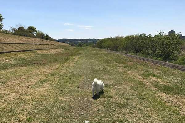 多摩川沿いのお散歩コース